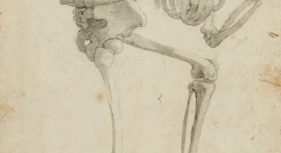 Lot 2130 Nr. 398 240 Alessandro Allori Skelett, nach rechts schreitend Kreide in Schwarz auf Papier (Wasserzeichen: Armbrust im Kreis mit kleiner Lilie), 40 x 27,5 cm. Bezeichnet unten rechts: Agnolo Bronzino il vecchio Schätzpreis: € 3.000 – 3.500,- Ergebnis: € 525.000,-