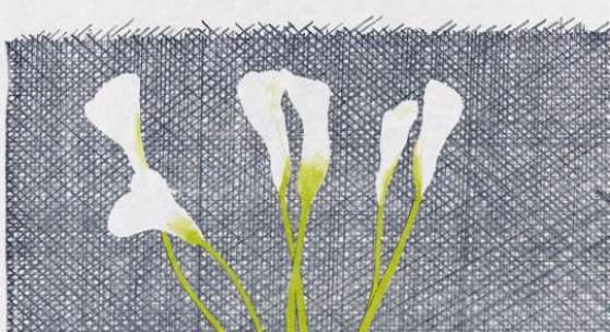 Direktverkauf   Lot: 207   Hockney, David  Lillies  Verkaufspreis: 12.000 EUR / 16.080 $