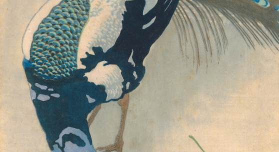 MIT DEM AUGE DES KÜNSTLERS Carl Moser, Weißgefleckter Pfau, 1906, Farbholzschnitt, 311 x 311 mm, aus der Sammlung Wilfried Kirschl  © T