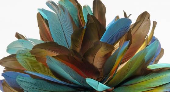 Armring (Detail). Federn, Rindenbast, Palmblatt und Baumwolle Kayapó Txukarramãe, Pará, Brasilien. Gesammelt von Luiz Boglar, 1988. Sammlung Weltkulturen Museum. Foto: Wolfgang Günzel