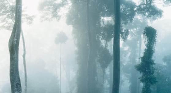 Axel Hütte, Danum Valley-1, Borneo, 2008, Ditone Print, 225 x 155 cm, Kunstsammlung Nordrhein-Westfalen, Düsseldorf, © Axel Hütte