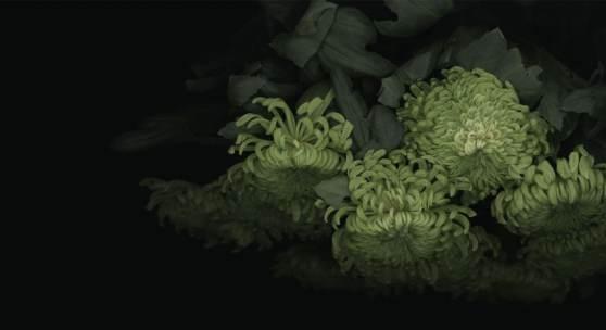Luzia Simons, Chrysanthemum 04, 2013, Scanogramm, Fine Art Print auf Awagami Bamboo Papier, Aludibond © Luzia Simons | VG Bild-Kunst, courtesy ALEXANDER OCHS PRIVATE