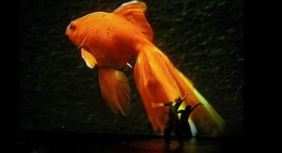 Jochen Viehoff, Pina Bausch tanzt ein Solo in Danzón (Ausschnitt), Fotografie