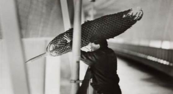Bildlegende: Roman Signer Weihnachten, 1993 6 s/w-Fotos auf Baryt, je 24 x 36,4 cm Kunsthaus Zürich Fotos: Stefan Rohner, © Roman Signer