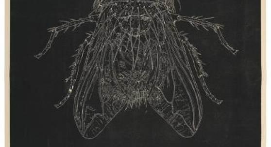 "Abbildung: ""Vertigo"", 2014, Holzschnitt auf karbonisiertem Filz, 166,5 x 125 cm. Foto: Babette Bangemann · Portraitfoto: Marc Guddorp"