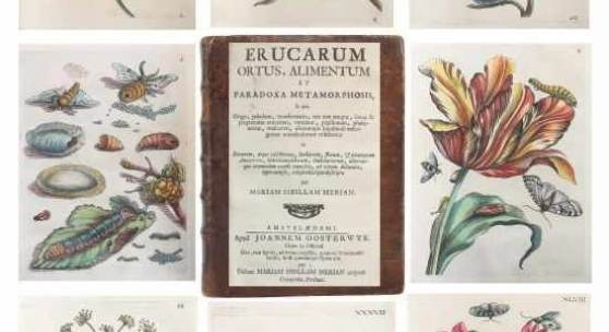 Merian, Maria Sybilla Erucarum ortus, alimentum et paradoxa methamorphosis Preise Mindestpreis:12.000 EUR