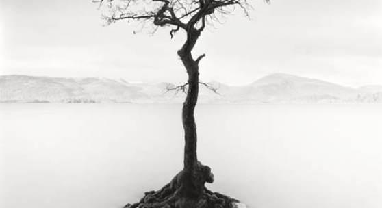 Arkadius Zagrabski   Milarrochy Tree, Scotland   Fotografie   2013