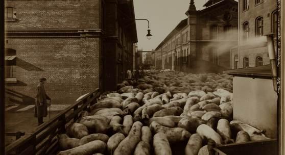 Atelier J. Hamann, Auftrieb von Schweinen, 1917, Silbergelatineabzug, 24,2 x 30,7 cm, © Staatsarchiv Hamburg