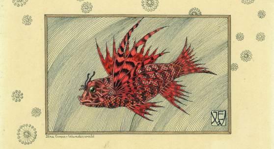 Ilna Ewers-Wunderwald Rotfeuerfisch o.J.- Feder und Aquarell auf Papier Privatbesitz