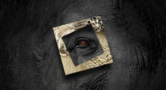 schrecklich schön Elefant – Mensch – Elfenbein