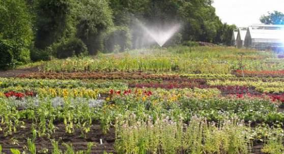 Parkgärtnererei, Frisch aufgepflanztes Mutterpflanzenquartier © SPSG / Foto: Hans Bach