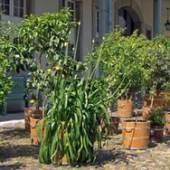 Unternehmenslogo Museum für Europäische Gartenkunst