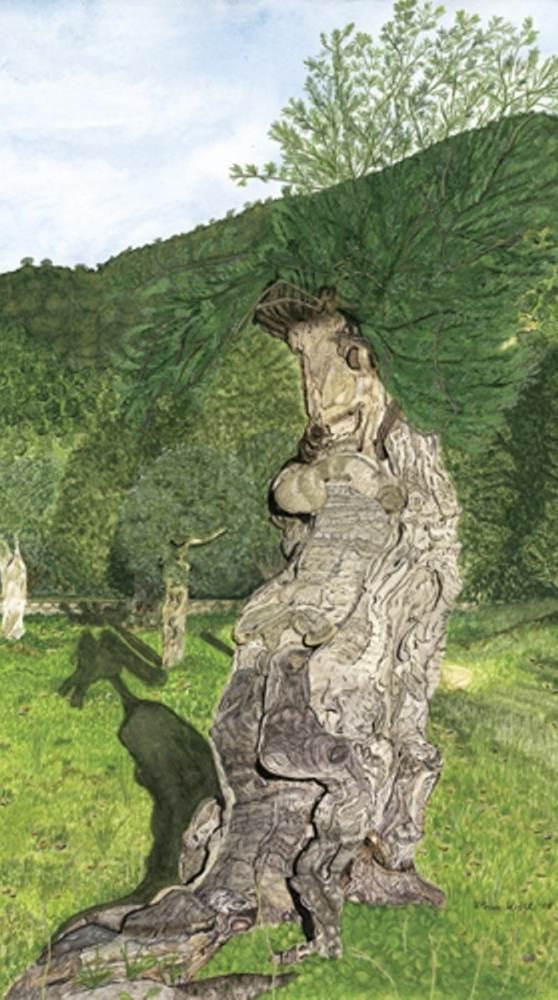 Olivenbaum - Aquarell