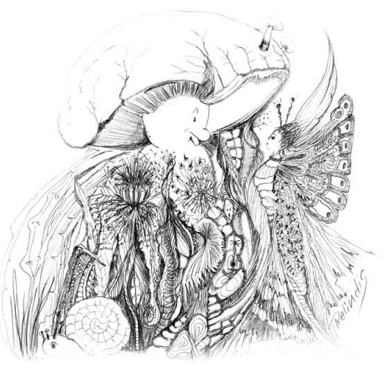 Pilz und Schmetterling