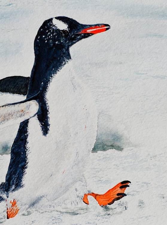Mit Flossen durch den Schnee - nach Stefan Forster