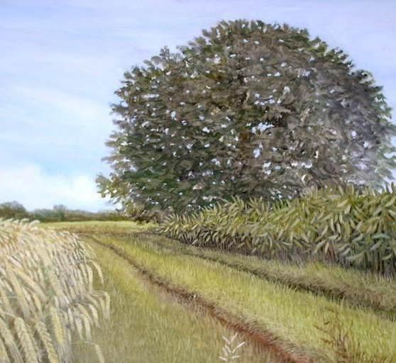 Nussbaum im Feld