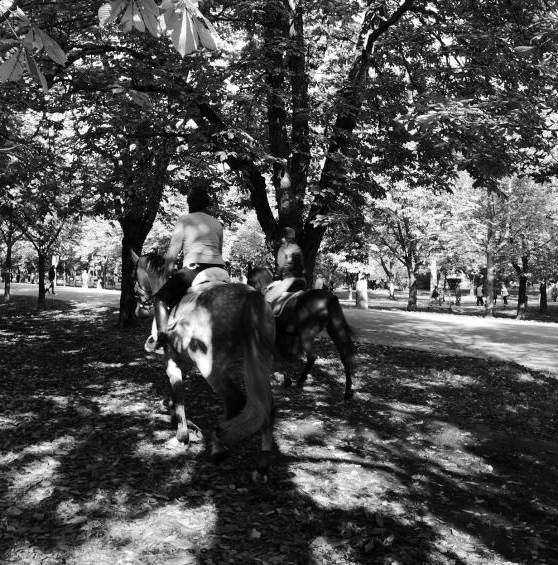pferde haben auslauf