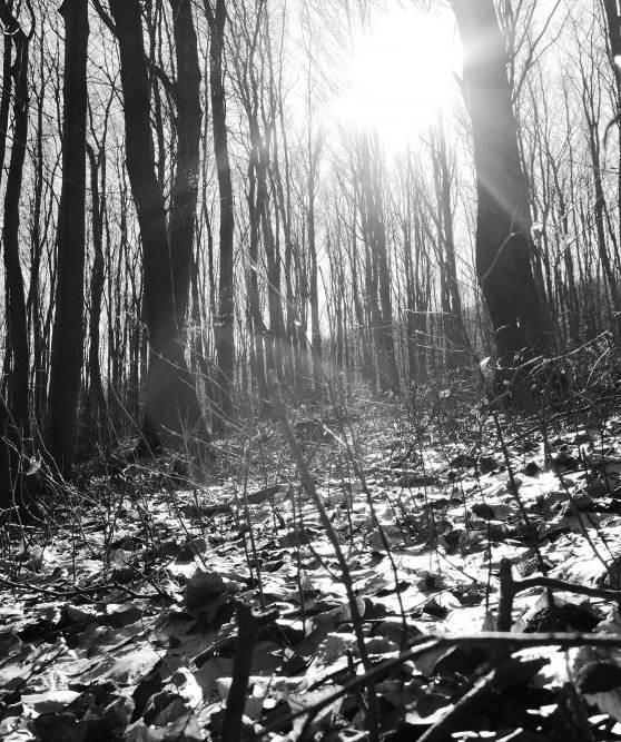 sonnenaufgang in den wäldern