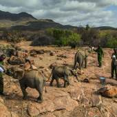 11 February 2017 Pfleger füttern Elefantenbabys im Reteti Elephant Sanctuary im Norden Kenias. Ami Vitale for National Geographic