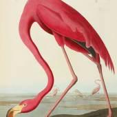 10256 Plate CCCCXXXI, American Flamingo