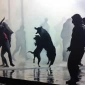 Schroeder Constantin, Hunde, 2013, Öl a. LW, 140 x 120 cm, CCA&A Gallery, Wohltorf Hamburg- D