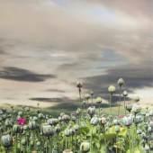 Helmut Grill, 'Addicted'