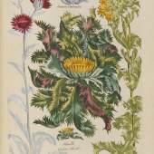JOHN HILL Vegetable System. 13 Bde. 1775. Schätzpreis: € 60.000