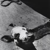 MADAME D'ORA (DORA PHILIPPINE KALLMUS), Abgetrennter Kalbskopf in einem Pariser Schlachthaus, um 1954 © Museum für Kunst und Gewerbe Hamburg | Foto: Museum für Kunst und Gewerbe Hamburg
