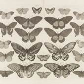 19 Albert Seba Locupletissimi Rerum Naturalium Thesauri. 4 Bde., 1734. Schätzung: € 20.000 Ergebnis: € 55.200
