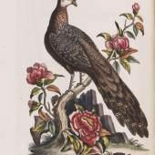 Nr. 29: Michael Johann Seligmann – Sammlung verschiedener ausländischer und seltener Vögel Nürnberg 1749-76