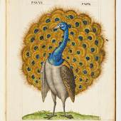 Librairie Thomas-Scheler This stunning piece is one of multiple depictions of beautifully rendered exotic birds, done by Pierre Gourdelle. The folio contains 50 sheets depicting 60 European & Exotic birds. Each watercolor is accented with gilt and richly decorated.