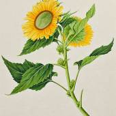 Donald A. Heald Rare Books This beautifully rendered gouache drawing is just one from an album containing 36 original drawings of flowering plants. Done from the Canton School, these pieces are all elegantly laid out and presented in brilliant hues.