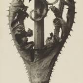 Karl Blossfeldt, Dipsacus laciniatus. Weberdistel, vor 1927  Stiftung Ann und Jürgen Wilde, Pinakothek der Moderne, München
