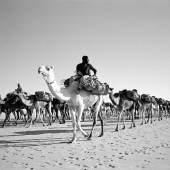 Karawane durch die Wüste, Alexander Magedler (c)