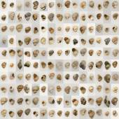 Anna Ridler, The Shell Record