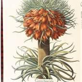 Besler, B. Hortus Eystettensis. (Hrsg. von J. G. Sthenander = Starckmann). 4 Tle. in 2 Bdn. (Eichstätt) 1713 (= ca. 1750). Gr.-fol. (57:46 cm). Mit gest. Titel von W. Kilian u. 367 kolorierten Kupfertafeln mit Rückentext. 13; 32 nn. Bll. zwischengebunden. Braune Ldr. d. 20. Jahrhunderts im Stil d. Zt. mit goldgeprägter Deckelbordüre, Wappensupralibros u. reicher Rückenvergoldung.  Schätzpreis:100.000 EUR