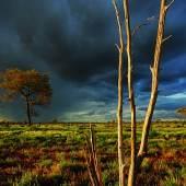 Kontrastreicher Sonnenuntergang in den Ngaanyatjarra Lands © Tim Acker