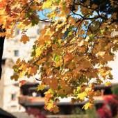 Bunt und vielfältig wie der Herbst ist auch das Kulturprogramm im Oktober in der Künstlerstadt Gmünd. Der Großteil der Ateliers und Galerien ist noch bis Ende des Monats geöffnet! (Foto: ©Andrei Kraev)