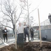 Baumpflanzung im Rahmen der Pressekonferenz  Foto: eSeL.at - Lorenz Seidler