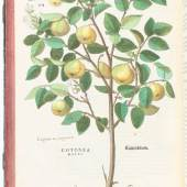 Fuchs, L. De historia stirpium commentarii insignes, maximis impensis et vigilis elaborati, adiectis earundem vivis plusquam quingentis imaginibus. Basel, M. Isengrin, (1542) Schätzpreis:400.000 EUR