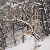 Franz Gertsch Sommer (2009), Winter (2009) Besitz des Künstlers, © Franz Gertsch