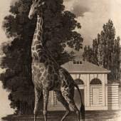 Die erste Giraffe in der Menagerie von Schloss Schönbrunn Eduard Gurk Kupferstich, 1828