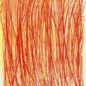 Günther Uecker Steppenbrand Farblithografie, 2008 80,2 x 60,4 cm / 31,5 x 23,7 inches Startpreis: € 1.580