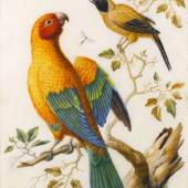 STEPHEN ONGPIN FINE ART Herman Henstenburgh (Hoorn 1667 - 1726) A Sun Conure Parrot and a Yellow-Backed Oriole, c.1685 - 1720 Gouache and watercolour on vellum 301 × 204 mm. (11 ⅞ × 8 in.) POA
