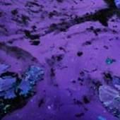 """Abb.: """"Water Lillies I"""" (Ausschnitt), Diasec gerahmt, 170 cm x 242 cm, 2013"""