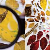 Foraging and colour harvesting imagery from Forest & Whale
