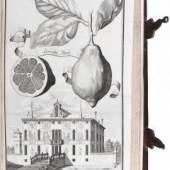 """Johann Christoph Volckamers """"Nürnbergische Hesperiden"""", das berühmte 1708–14 in Nürnberg erschienene Werk über Zitrusfrüchte, fand mit 30.000 € verkauft"""