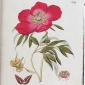 """""""Abbildung aller oekonomischen Pflanzen"""" (Stuttgart 1786–96) von Johann Simon Kerner, die mit 14.000 €  verkauft"""