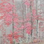 Sonja Maria Schobinger  Trees, Nr. 30, 2018 Pigmentdruck auf Fine Art Papier Hahnemühle Photo Rag Ex. 2/5 90 x 130 cm