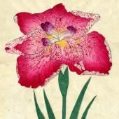 """((Bild """"Iris nr 20 komp"""", Bildnachweis: Kunstkabinett Strehler)) Eine exotische Rarität aus dem Jahr 1910: die japanischen Farbholzschnitte des Kunstkabinetts Strehler."""